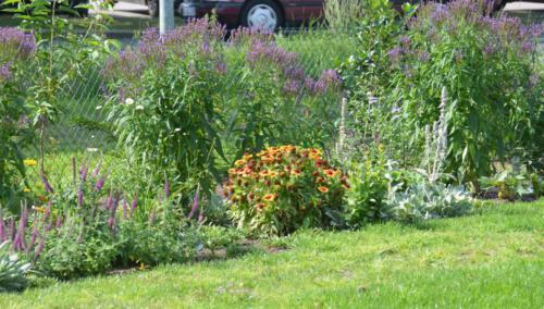 Unser Wildblumengarten